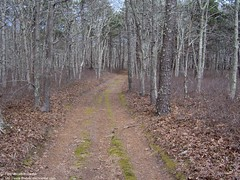 Trail on Bound Brook Island (The Cape Cod 2) Tags: capecod trail wellfleet boundbrook boundbrookisland