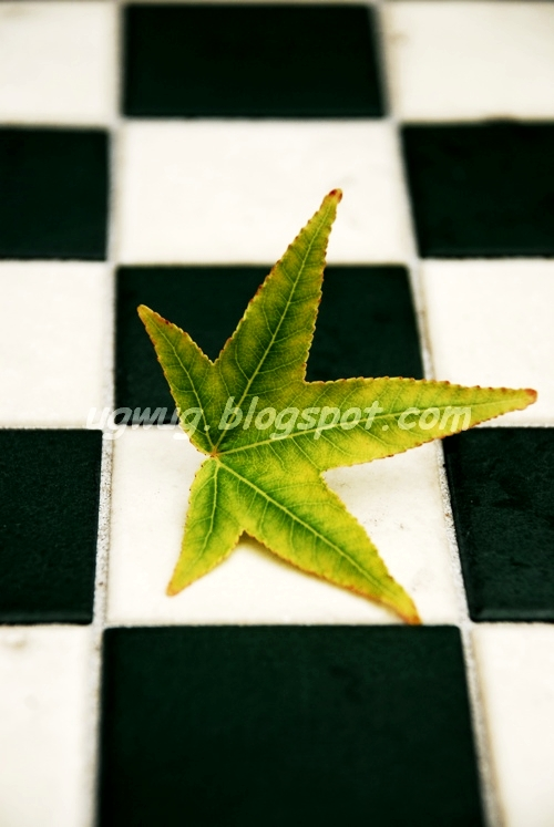 Chequered Leaf