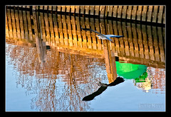 Reflection (M van Eden) Tags: reflection heron water buoy reiger reflectie boei buoyant