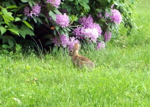 Bunny_6711d