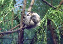 Sloth_61811