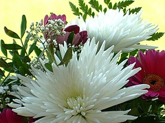 A wonderful bouquet (ho.ge) Tags: flowers searchthebest bouquet soe fantasticflower anawesomeshot ultimateshot flowersarebeautiful theperfectphotographer goldstaraward