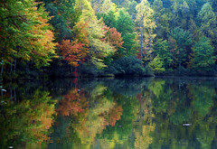 Autumn at the lake (bdaryle) Tags: park lake reflection fall nature water leaves fallcolor sony northcarolina explore umsteadstatepark brandondaryle bdaryle imagesbybrandon onlythebestofnature