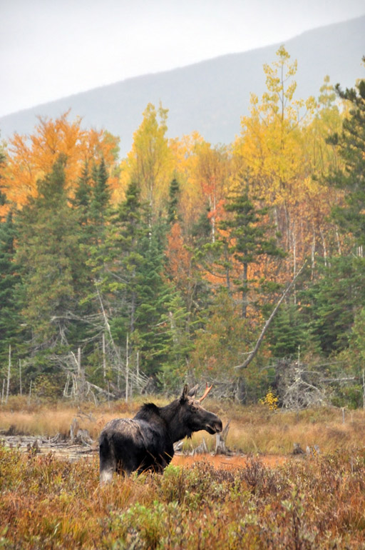 moose_mountain_0001