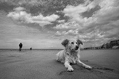 (dirtyharrry) Tags: sky blackandwhite bw dog blancoynegro canon blackwhite dirty creta greece crete rethymno dirtyharry rethimno nologos 5dmkii dirtyharrry nobanners