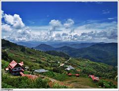 Kampung Kinasaraban, Kundasang (sam4605) Tags: rose landscape cabin village farm vegetable malaysia borneo merlin kampung sabah kinabalu sayur pemandangan kundasang kebun ranau sabahborneo kinabalurosecabin kinasaraban himbaan
