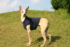 20041103_IMG_2332 (Shinji Ueda) Tags: pen all italiangreyhound