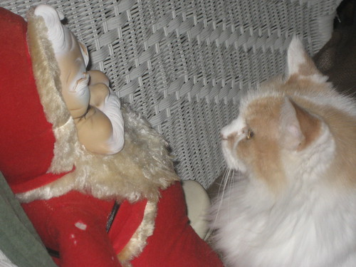 Miss Kitty stares down Santa Claus