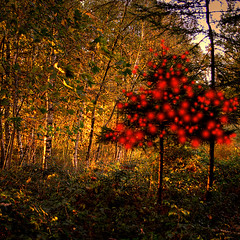 Surprise in the forest (genevieve van doren) Tags: trees light red sunlight forest rouge soleil lumire christmastree arbres foret hdr adiction sapindenoel