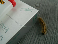 Smoke Catipillar (Scott Barrett) Tags: catipillar virginiaslims