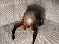 My pet (Alex [DELETED] find me on youtube(/user/8552100)) Tags: life 2 pet real half halflife hl2 headcrab