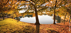 Cypress on Lake (Cuong T Tran Photography) Tags: panorama fall texas houston sugar land hdr foliages
