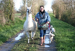 dogscometoo (imagesofnormandy) Tags: snow playing chickens dogs animals cottage llama freerange fresheggs gite holidayrental couplesonly llamawalks llamatreking