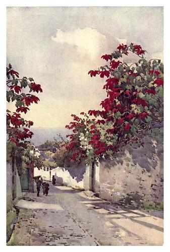 008-Flores de Pascua en una carretera de montaña en Madeira-The flowers and gardens of Madeira - Du Cane Florence 1909