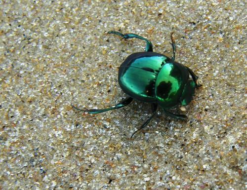 escarabajo verde brillante