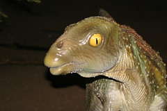Leaellynasaura at Dinosaurs Unleashed