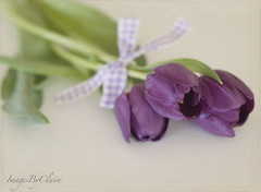 Purple tulips & ribbon (ImagesByClaire) Tags: greenleaves 50mm purple tulips explore bow ribbon tiedup myfavoriteflower lovethese project365 lovepurple fromcostco florabellatexture florabellaaction storybookwinner