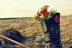 Tribute To A Cowboy (MTOWN JAYHAWK) Tags: flowers field rural fence boot nikon barbedwire kansas picnik d90 nikond90