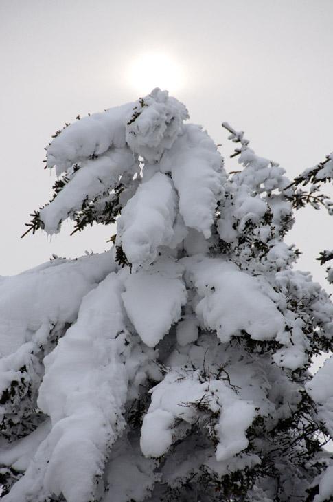 web_suntree_snowshoe_0188_2511