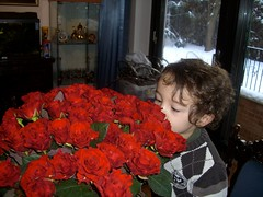 flower-bouquet 11 (55roses) (17) (Wortra) Tags: flowers boy roses blumen son rosen nicky february09