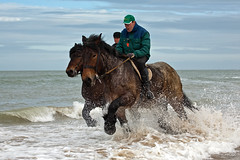 """Stra-rien"" (Beach Riding) (BraCom (Bram)) Tags: sea beach waves driving ride action run ritual schouwen hors folklorist platinumheartaward bracom 4timesasnice"