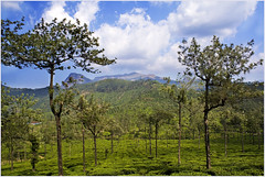 Nature does not hurry, yet everything is accomplished / Valpaarai (Fountain_Head) Tags: blue trees india house mountain green texture clouds pattern estate shapes shade polarizer tamilnadu teaestate leadinglines valpaarai nearcoimbatore