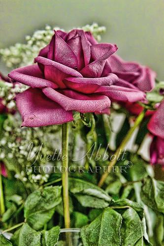IMG_0800 rose2