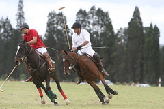 polo (rdlt) Tags: horses horse sports sport club canon caballos photography eos colombia play shot photos action best deporte match players polo equestrian equine mallets 30d jugadores marzo7del2009