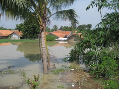 houses and coconut tree (Fernando_je0V) Tags: floaded