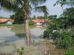 houses and coconut tree (Fernando_je0V) Tags: floaded
