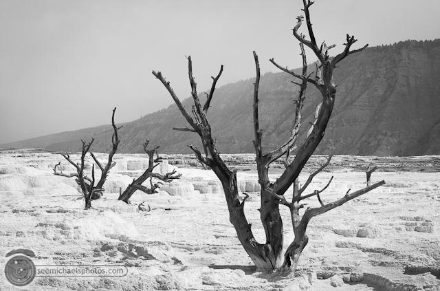 Yellowstone Day 1 52611 © Michael Klayman-025