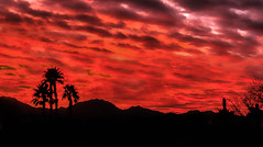 Fiery Sunrise (http://fineartamerica.com/profiles/robert-bales.ht) Tags: arizona foothills forupload haybales land people photo places projects scenic states sunrisesunset sunsetorsunrise sunrise sunset redsky twilight yellow clouds landscape southwestphotography beautiful sensational spectacular sceniclandscapephotography desertphotography panoramic awesome magnificent peaceful surreal sublime sonora inspirational path morning silhouette sunrisephotography red sonoradesert robertbales desertecosystem desert nature sky yuma sun gilamountains