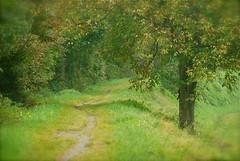 Sogni d'autunno (tai ji) Tags: verde alberi sentiero autunno bosco sogno