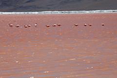 baudchon-baluchon-laguna-colorada-0430