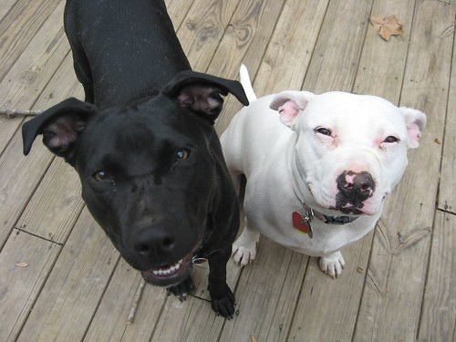 Betty and Suzy are sweet girls!!