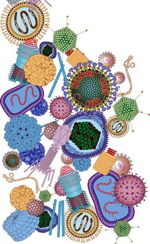 virus1