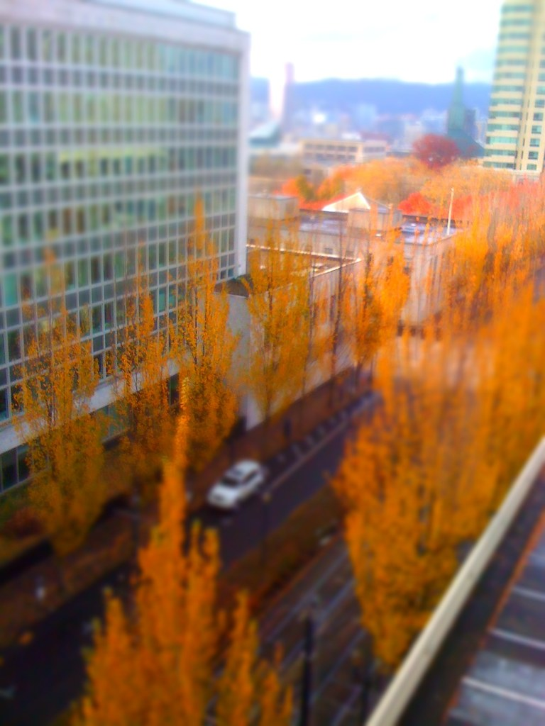 Portland Trees Tilt-Shift