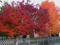 L'autunno di Pertegada! (Kalsa (m.a.mondini)) Tags: abigfave concordians goldenart