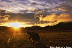 Today is coming now (waltersoluh) Tags: sky cloud dog nature sunrise landscape rs platinumphoto theunforgettablepictures alwaysexc colorsofthesoul artistictreasurechest redmatrix magicunicornverybest adrinnesmagicalmoments