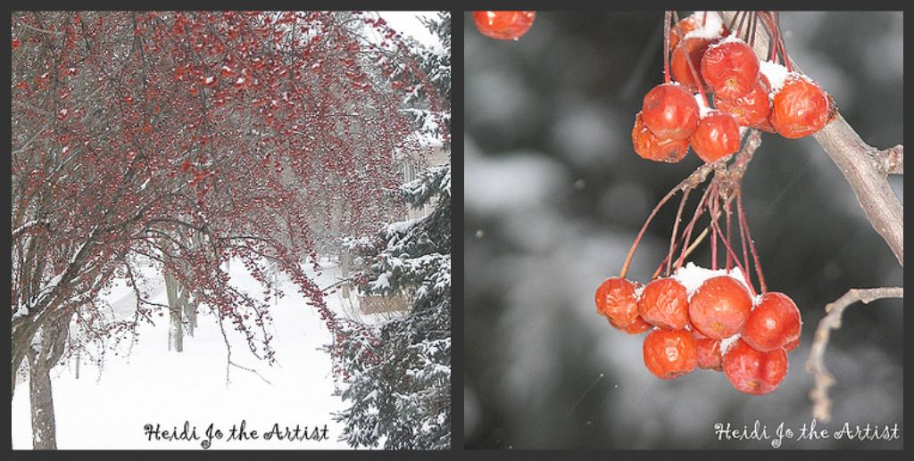 Crab Apples Collage