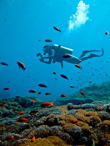 Deep Sea Diving: Deep Sea Diving Definition