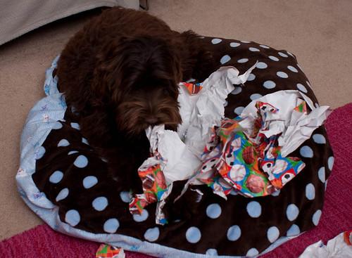 Ewok eating wrapping paper