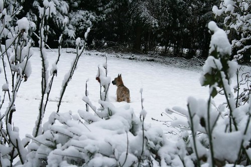 first snow