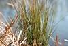März (pixel-rausch) Tags: grass calendarshot
