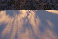 Shadows at sunset (randihausken) Tags: winter snow vinter shadows sn skygger