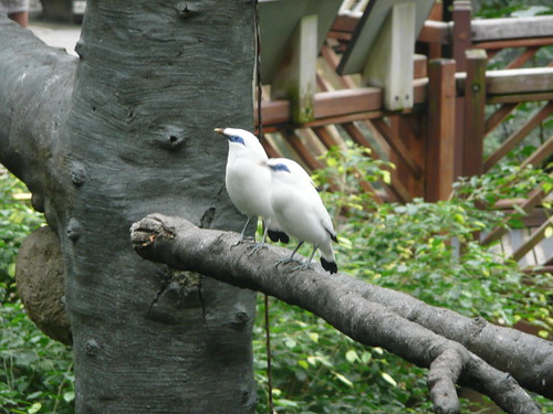 Hong Kong Park Aviary