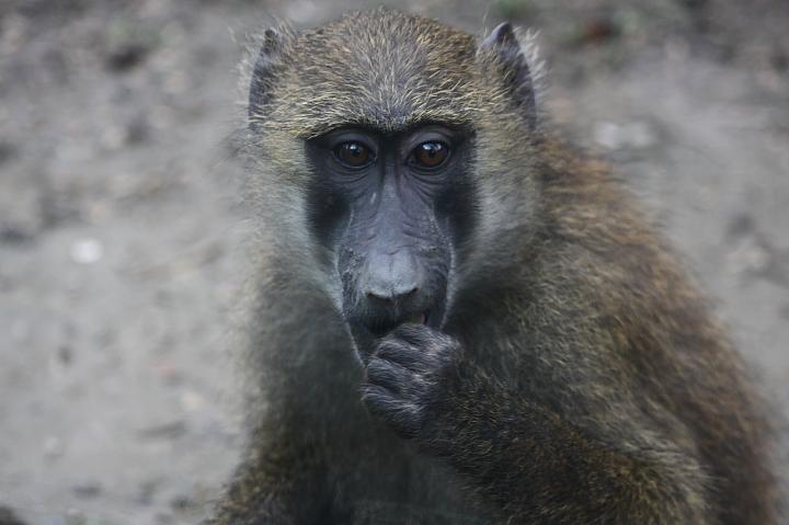 2009木柵動物園0018