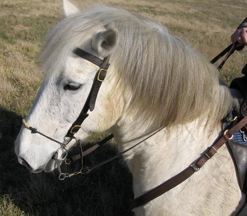 Gandalf the Grey 4255027608_d247b610fa