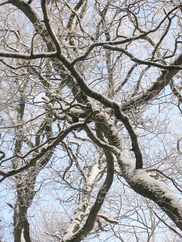 snow-woods5