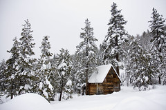 40 Day Dream. (CodySLR (Old)) Tags: california trees winter white snow mountains cold beautiful cabin skiing january squaw squawvalleyusa